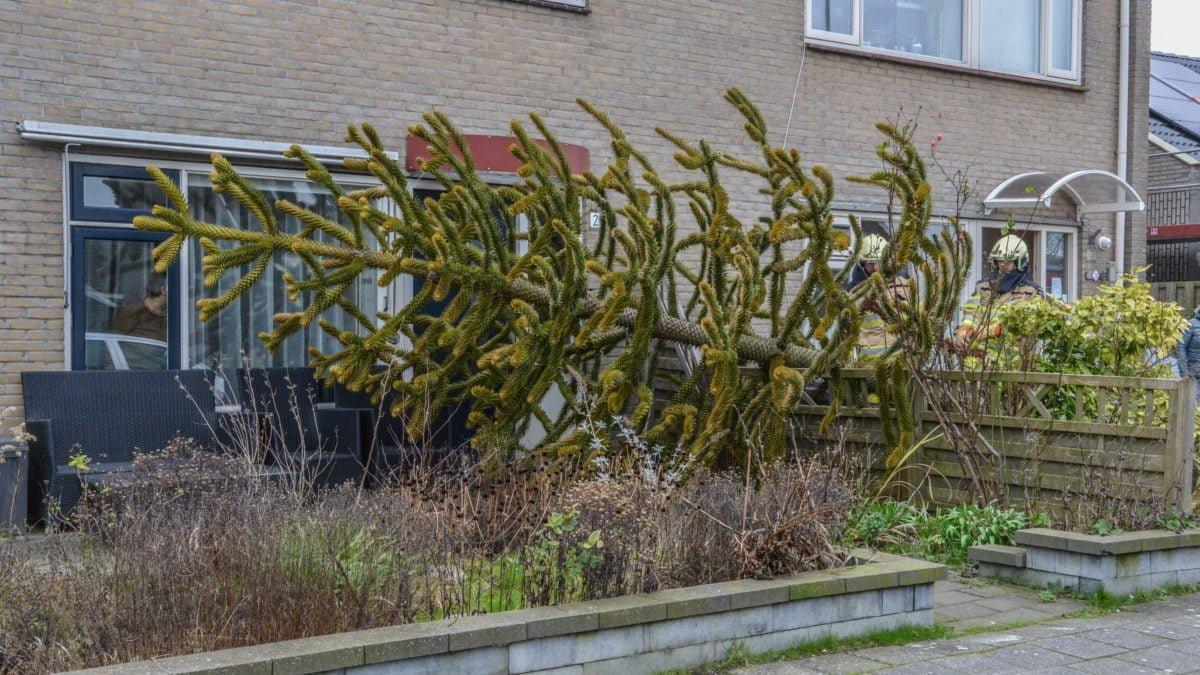 Boom waait voor de deur van de buren in Sint Jansklooster