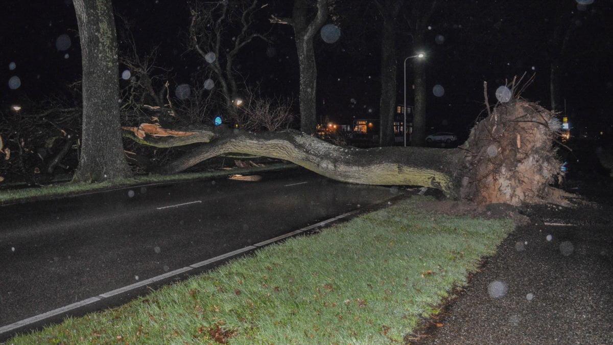 Forse ravage op Meppelerweg na afbreken takken en omwaaien bomen (Update)