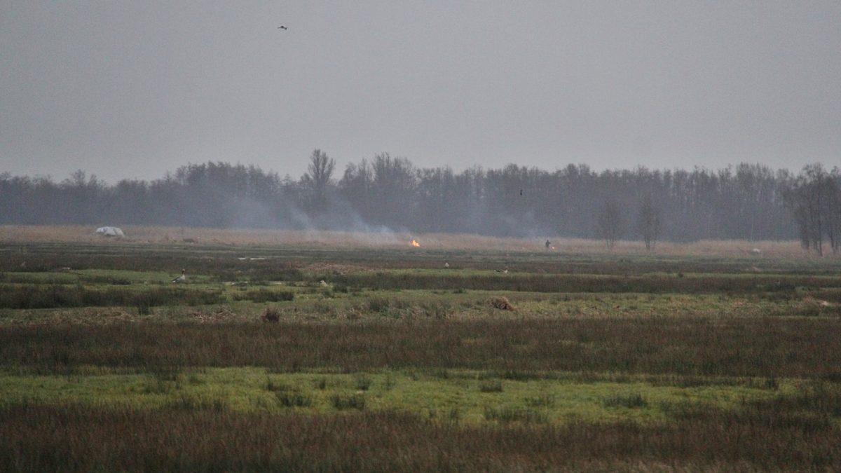 Rietbrand in Nationaal park de Weerribben – Wieden bij Giethoorn