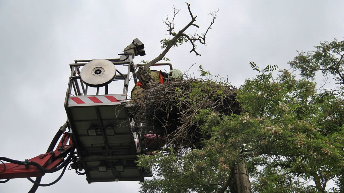 Brandweer Meppel haalt drie jonge ooievaars uit nest