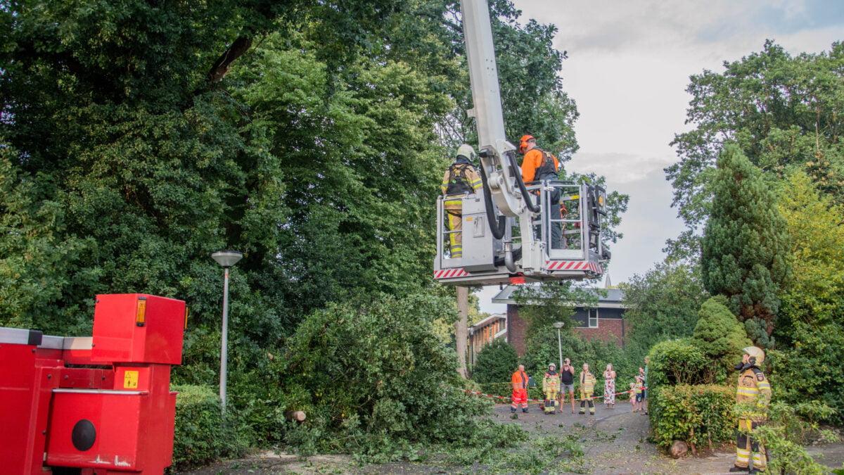 Brandweer verwijdert afgebroken tak van weg in Steenwijkerwold