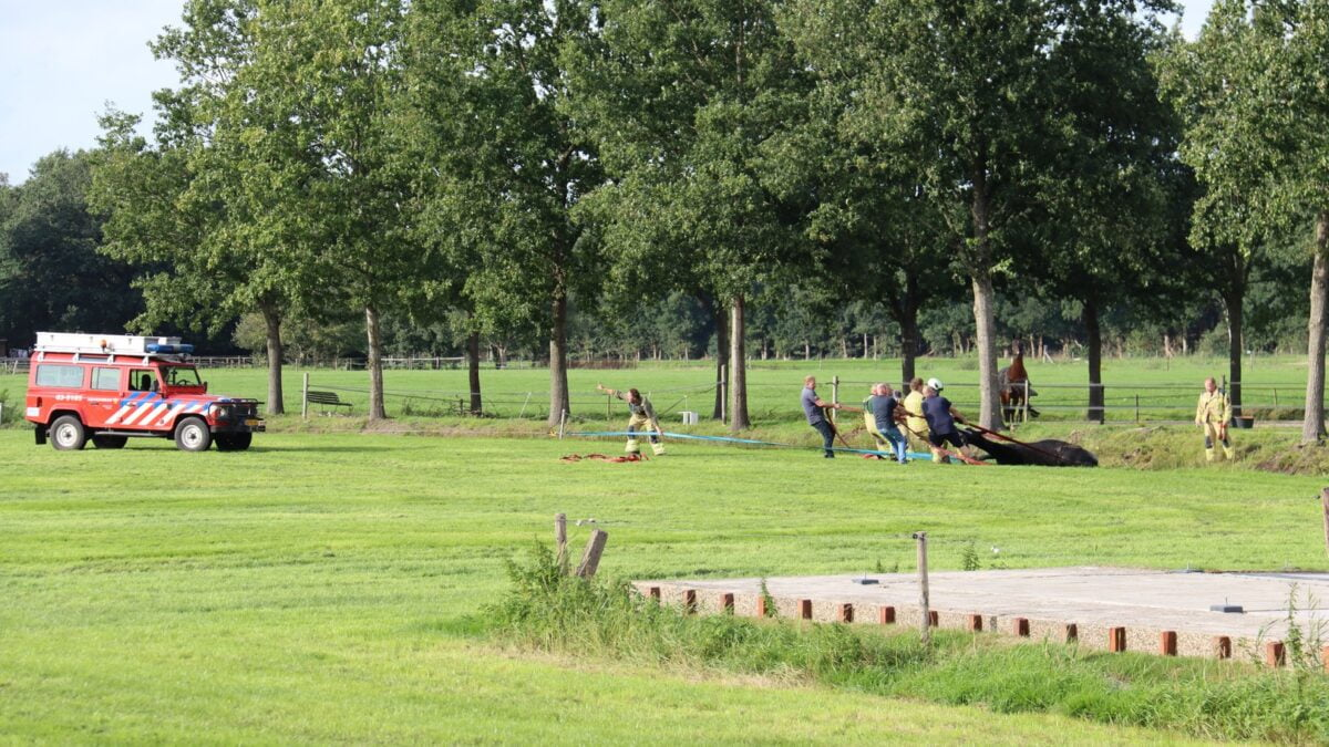 Paard gered uit sloot in Nijensleek