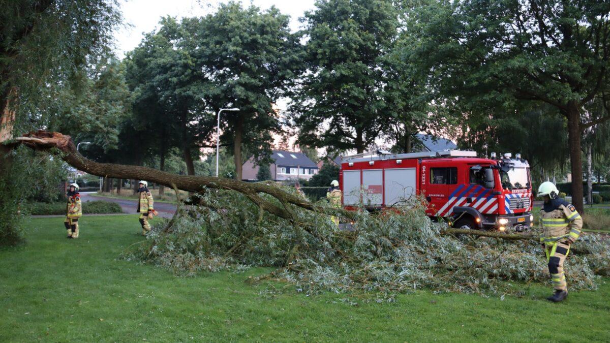 Grote tak afgebroken van enorme boom aan de Middenweg in Steenwijk